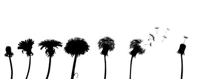 Dandelion life chain Royalty Free Stock Images