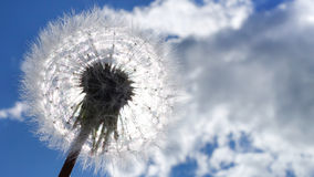 Dandelion like a sun with seeds. Against blue sky with clouds. Peace concept. stock photography