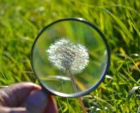 Dandelion through a magnifying glass Stock Photos