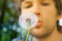 Dandelion and man face on background Stock Image