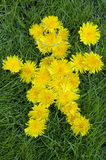 Dandelion Man - Symbol of Spring and Summer. Royalty Free Stock Photo