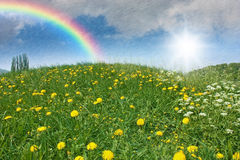 Dandelion meadow. With rain, sunshine and a rainbow in the sky Stock Photography