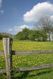 Dandelion meadow. Field of dandelions in Germany Royalty Free Stock Photography