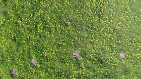 Dandelion on a meadow. The Dandelion on a meadow stock video footage