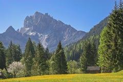 Dandelion meadow  in South Tyrol Stock Photos