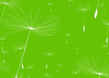 Dandelion negative Royalty Free Stock Photo