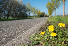 Dandelion next to the road Stock Images