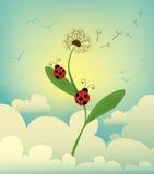 dandelion niebo Obrazy Stock