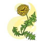 Dandelion odizolowywający na bielu ilustracji