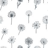 Dandelion old plant with seeds sketches outline,  pattern vector Stock Images