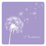dandelion on pastel background Stock Photography