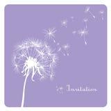 dandelion on pastel background Stock Photography