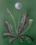 Dandelion, pastel, plant, spring, nature, flower, art. green garden,. Art dandelion, pastel, plant spring nature flower. green garden Royalty Free Stock Image