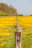Dandelion - pasture - fence post Stock Images