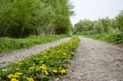 Dandelion path Royalty Free Stock Image