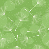 Dandelion pattern design Royalty Free Stock Photography