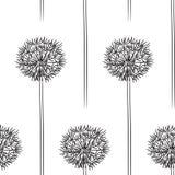 Dandelion pattern Stock Photo