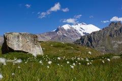 dandelion piękny pole kwitnie wiosna Zdjęcia Royalty Free