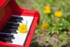 Dandelion and piano Royalty Free Stock Photos