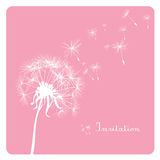 Dandelion on pink background Royalty Free Stock Photos
