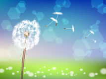 Dandelion with pollens on green grass background Stock Photo
