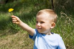 Dandelion present Royalty Free Stock Images