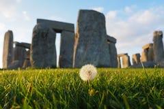 Dandelion przy Stonehenge obraz royalty free