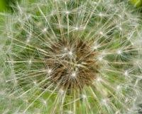 Dandelion with ripe seeds texture, macro, selective focus, shallow DOF Royalty Free Stock Photos