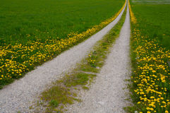 Dandelion Road Stock Image