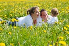 dandelion rodziny pola obrazek Zdjęcie Stock