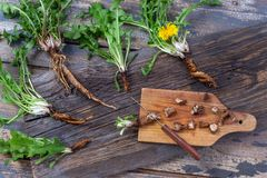 Dandelion root and whole plant on a wooden table. with root cut on cutting board with knife. Dandelion root and whole plant on a table. with root cut on cutting royalty free stock photography