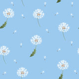 Dandelion seamless pattern on blue background Royalty Free Stock Photo