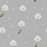 Dandelion seamless pattern on grey background Royalty Free Stock Image