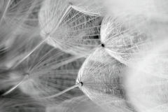 The dandelion seed. Close-up of dandelion seed with an abstract touch Royalty Free Stock Photo