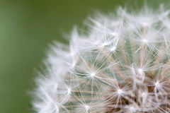 Dandelion Seed Close Up Royalty Free Stock Photography