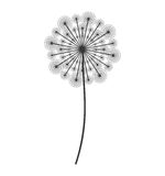 Dandelion seed decoration icon Royalty Free Stock Photo