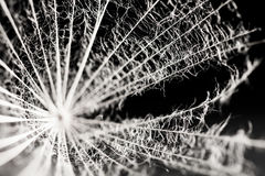 Dandelion seed with details Royalty Free Stock Photography