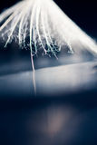 Dandelion seed with details Royalty Free Stock Photos