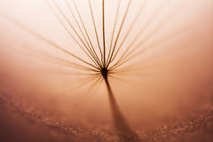 Dandelion seed with details Stock Photo
