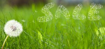 Dandelion seed in form a sale sign Royalty Free Stock Photos
