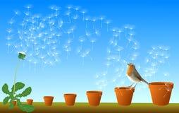 Flying Dandelion Seed Stock Photos