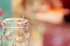 Dandelion Seed On Old Jar Stock Photos