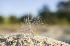 Dandelion seed. A dandelion seed on white sand with blurred background Royalty Free Stock Photography