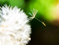 Dandelion seed in wind. Stock Image