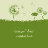 Dandelion seeds background. Illustration Stock Photo
