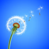 Dandelion seeds blowing away vector background Royalty Free Stock Image