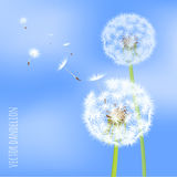 Dandelion seeds blowing away on the wind. Vector illustration of dandelion seeds blowing away on the wind in the clear blue sky over green spring meadow. Make a Royalty Free Stock Photo