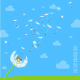 Dandelion seeds blowing away on the wind. Vector illustration of dandelion seeds blowing away on the wind in the clear blue sky over green spring meadow. Make a Royalty Free Stock Images