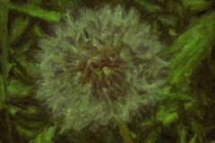 Dandelion with seeds blowing away in the wind Stock Photography