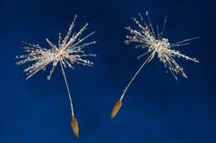 Dandelion seeds on blue Royalty Free Stock Photo